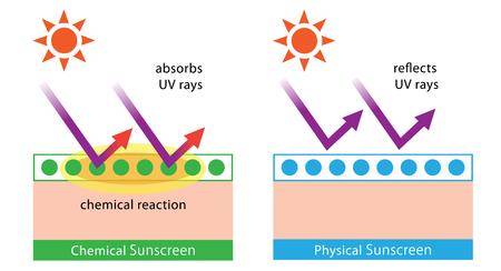 化学日焼け止めと物理的な日焼け止めの図