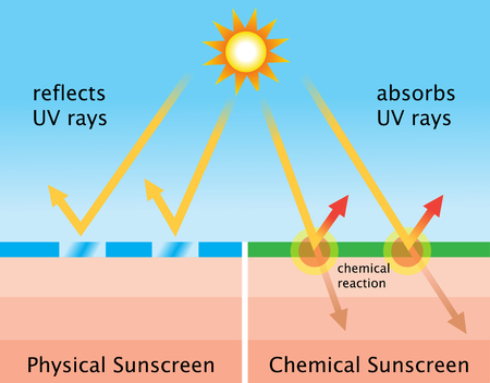 Diagram of chemical sunscreen and physical sunscreen Illustration