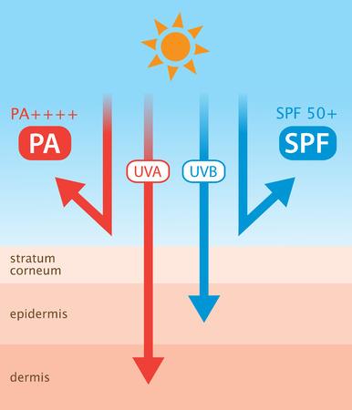 자외선 및 썬 스크린 다이어그램. SPF는 UVB 보호를 나타내고 PA는 UVA 보호를 나타냄 일러스트
