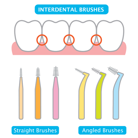 interdental brush remove germs,plaque, and food particles between teeth