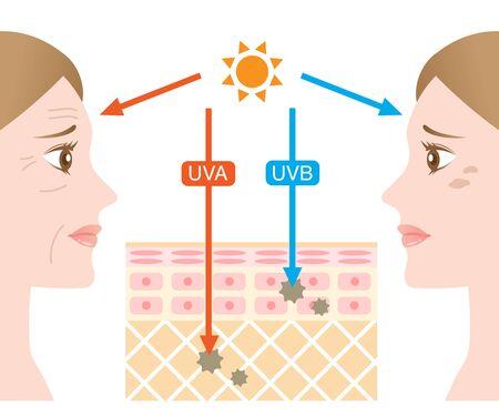 Ilustración de piel infográfica. la diferencia entre la penetración de los rayos UVA y UVB