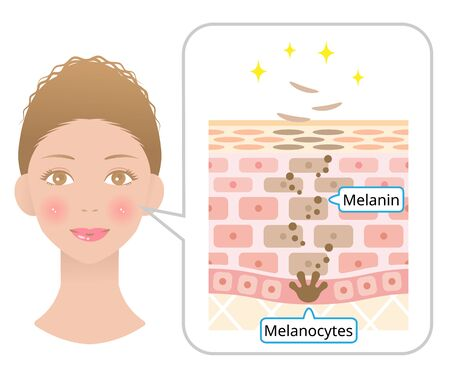 Human skin cell turnover anatomy and woman face. Beauty and skin care concept.