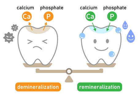 cute cartoon tooth. demineralization is caused by acids from bacteria. remineralization is the repair process. Healthy dental care.