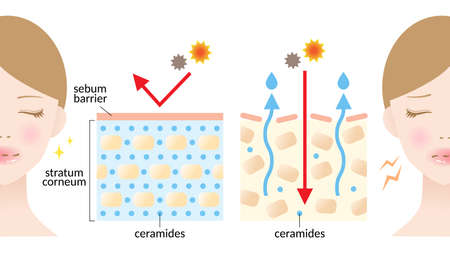 dry and hydrated skin layer with ceramide and woman illustration. beauty and skin care concept