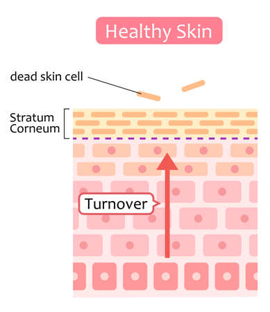 healthy skin cell turnover illustration. Skin care and beauty concept