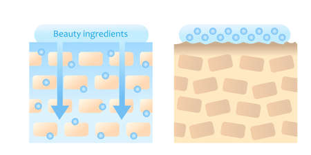 skin care  ingredients are  absorbed into skin before after. Isolated on white background.