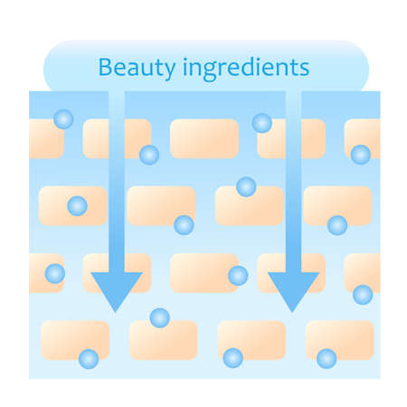 beauty ingredients are absorbed into skin illustration. Beauty and skin care concept