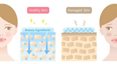 woman skin care ingredients are absorbed into skin before after. Isolated on white background.