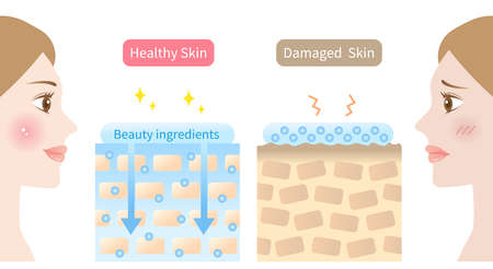 beauty ingredients are absorbed into skin illustration and woman face illustration. Beauty and skin care concept