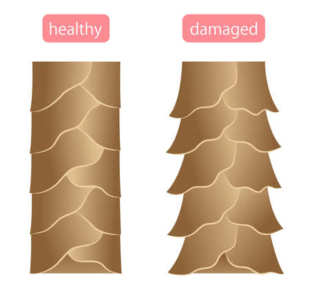 healthy and damaged hair cuticle illustration. hair care and beauty concept