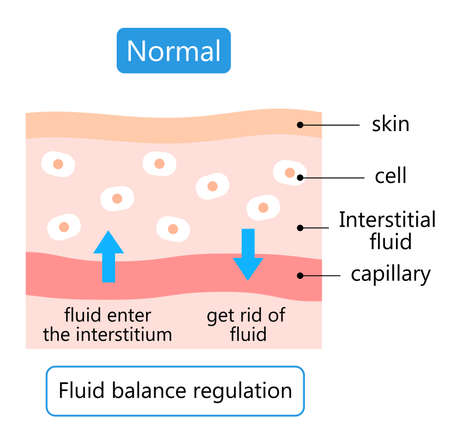 diagram of normal skin. maintain the balance of fluids both inside and outside of cells.  Health care concept 矢量图像