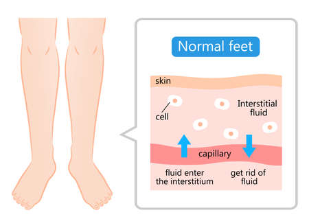 normal feet and skin diagram illustration. maintain the balance of fluids both inside and outside of cells.  Health care and beauty concept