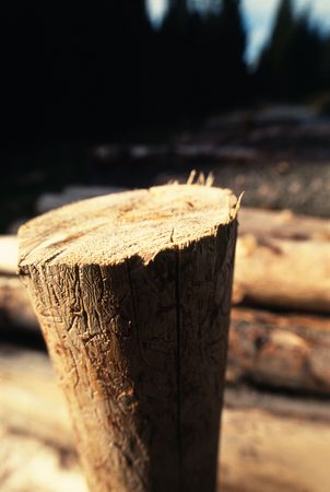 Tree trunk, closeup with shallow deep of field photo
