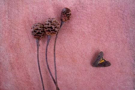vintagern: Moth.
