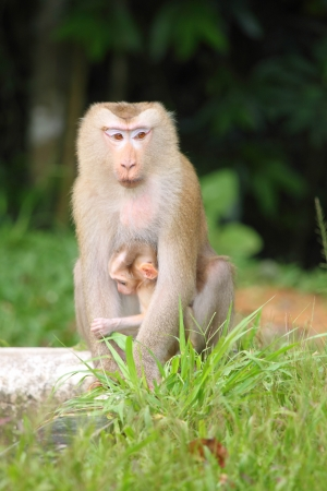 Cute mother and baby monkey at Khao Yai Nation Park in Thailand photo