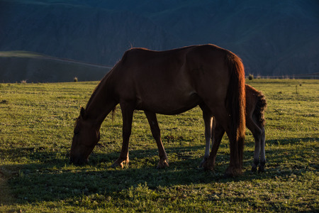 cloud capped: Horse on the meadow
