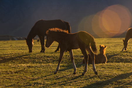 conservation grazing: Horses on the meadow