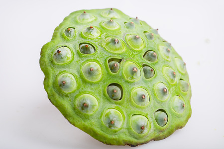 seedpod: seedpod of the lotus