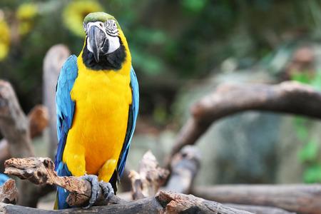 parrot Standard-Bild