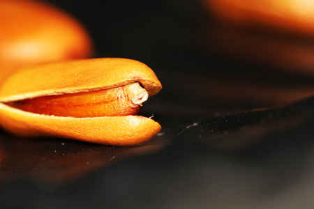pignons de pin: pignons de pin