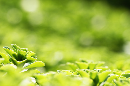 leafed: Green leaves Stock Photo