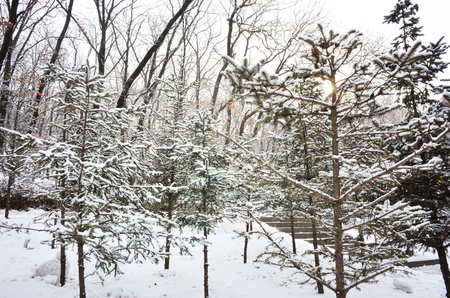 underbrush: Outdoor snow