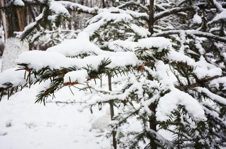ramification: Outdoor snow