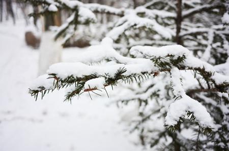 Outdoor snow