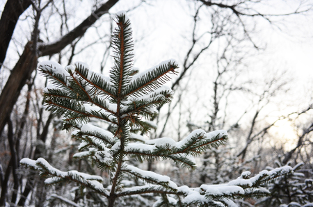 thicket: Outdoor snow