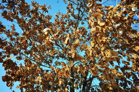 perish: Dead leaves in winter Stock Photo