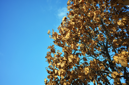 sear and yellow leaf: The winter leaves Stock Photo
