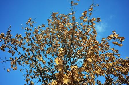 perish: The winter leaves Stock Photo
