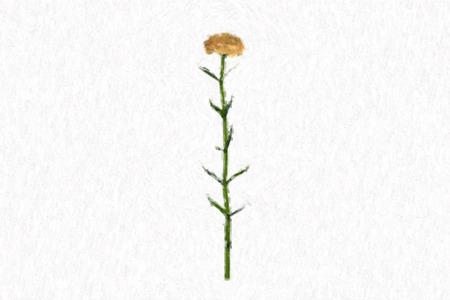 illustrated style of Carnation Lizenzfreie Bilder