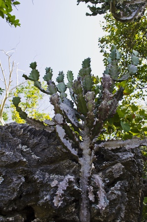 types of cactus: Cactus on a rock