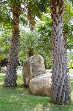 Palm trees and rocks in the garden photo