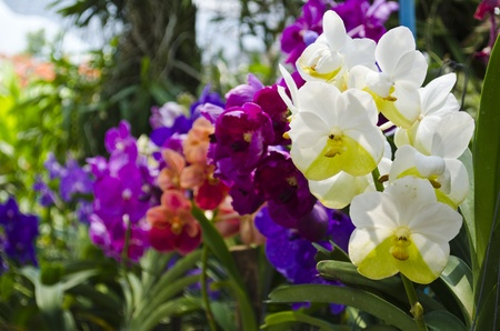 Orchids, a variety of colors,Thai orchid farm