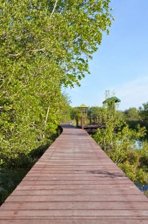 Wooden bridge for walking and nature study  Stock Photo - 15451542
