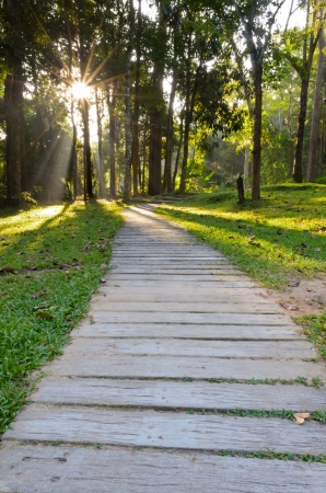 passages: Passages in forest to the Monthathan Falls  Chiang Mai  Thailand