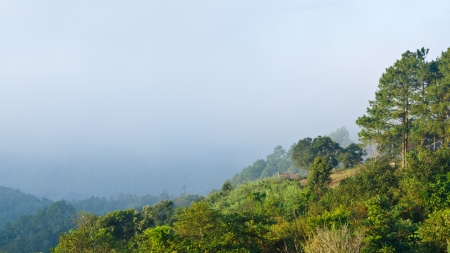 Scenic view of nature on the hill  Ang Khang mountains  Chiang Mai  Thailand photo