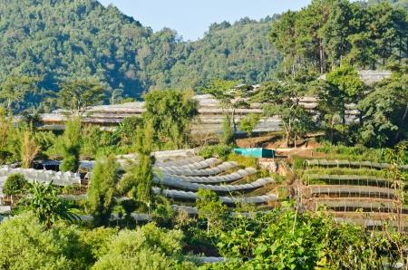 Flower farm on Doi Inthanon mountain in Chiang Mai, Thailand  photo