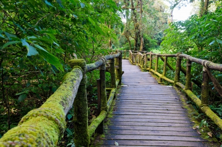 Wood bridge in the forest for nature walks on Doi Inthanon mountain , Chiang Mai, Thailand  photo