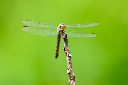 Front view of a dragonfly at rest on the branches