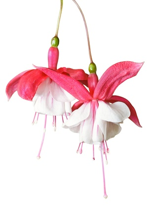 Beautiful exotic flowers that grow and bloom in the cold weather or winter of Thailand
