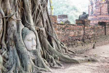 phra nakhon si ayutthaya: Head parts ruins of ancient buddha statue were covered up the roots of a banyan tree on the old wall at Wat Phra Mahathat temple in Phra Nakhon Si Ayutthaya Historical Park, Thailand