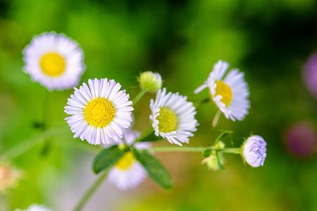 Nahaufnahmebiene, Die Nektar Auf Den Kleinen Gelben Blumen Von ...