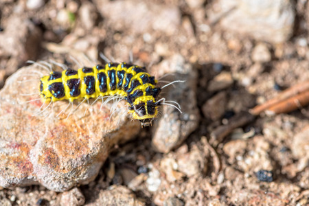 Closeup journey of the little worm with a black and yellow on the rock are finding their way on the ground under the sunlight Stock Photo
