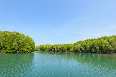 Beautiful nature landscape of mangrove forest at Phante Melaka Canal in summer. Water travel route to cruise to Crocodile Cave at Koh Tarutao National Park, Satun, Thailand