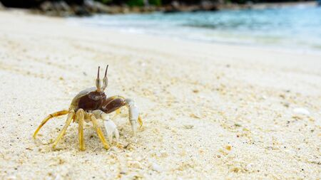 Beautiful nature of wildlife, Close-up of Wind Crab, Ghost Crab or Ocypode on the sand in summer at the beach near the sea in Koh Lipe island, of Tarutao National Park, Satun, Thailand Zdjęcie Seryjne