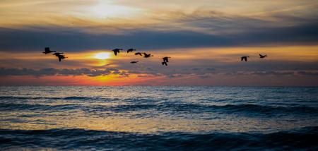 flock: Flock of Birds in the Morning Stock Photo