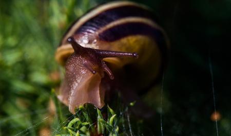close up: Snail Close Up